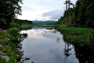 Swamp before the Storm - Hillsboro, NH