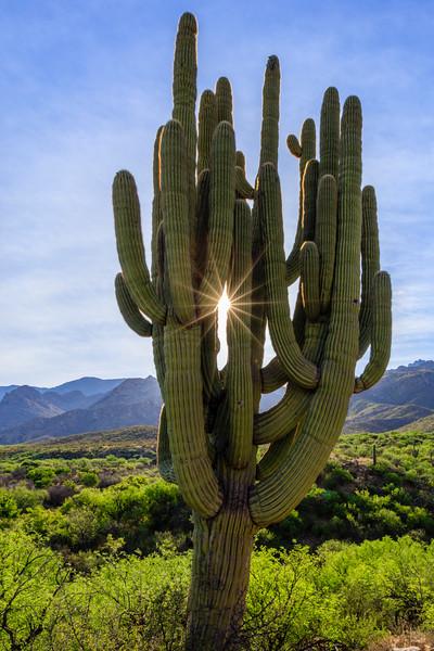 Saguaro NP-47