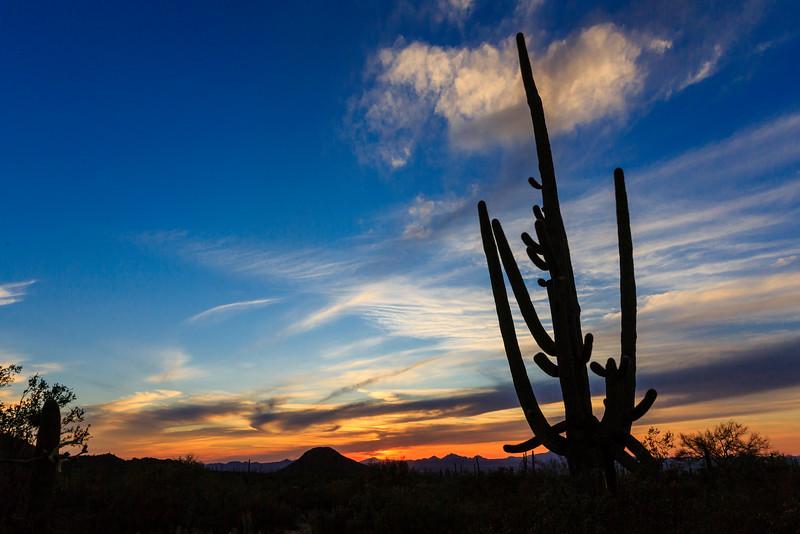 Saguaro NP-24
