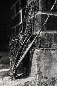 weeds+bricks-t0796