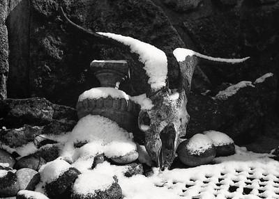ram_skull+snow-t0673