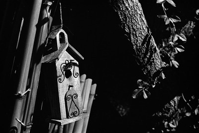 bird_house-t0701
