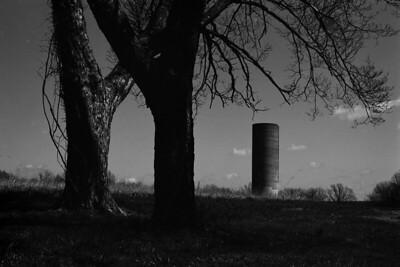 trees+silo-t0698