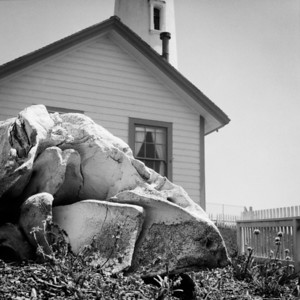 Whale Skull at Pigeon Point