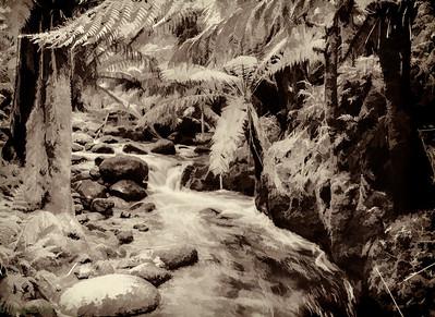 Thick rainforests of tasmania