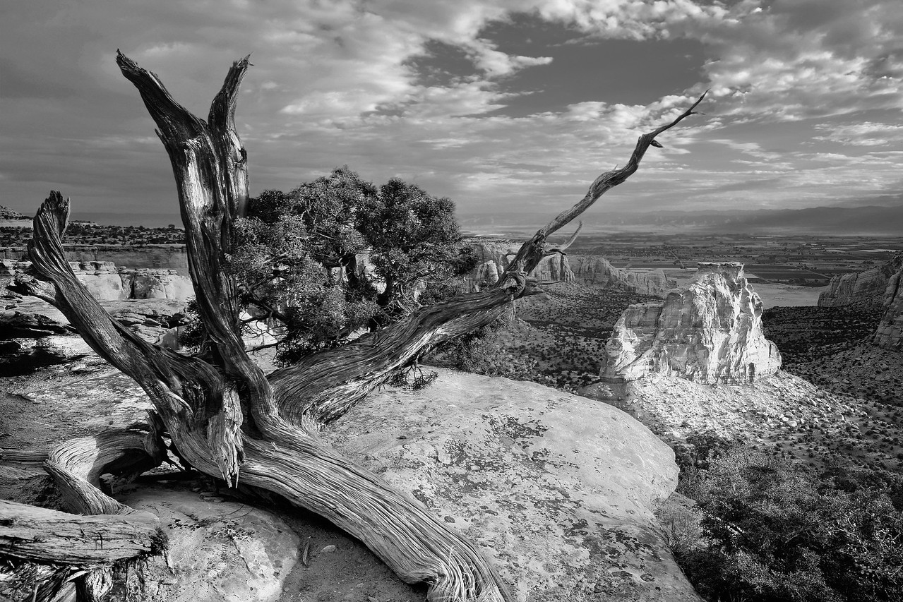 Old Juniper, Colorado National Monument, desert vista
