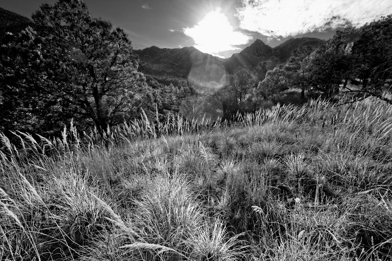 Backlit Grasses - Chiricahua Wilderness, Arizona