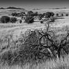 Grazing Lands, Coronado National Forest, Southern Arizona