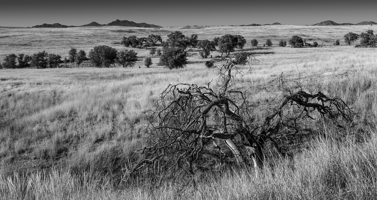 Grazing Lands, Coronado National Forest, Southern Arizona