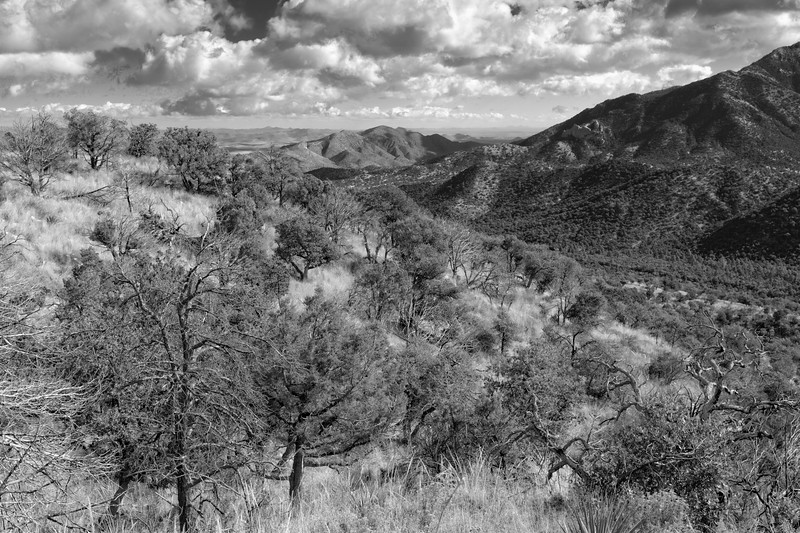 Chiricahua Mountain Wilderness