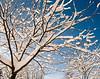 Snow Cradle