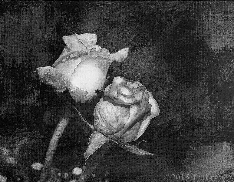 Rose Tapestry II