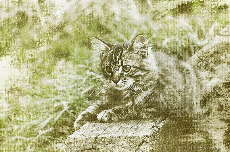 Canvas Kitty