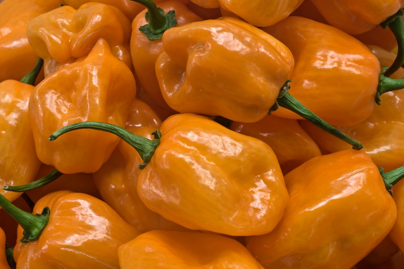 Habanero Chile Peppers - Capsicum chinense