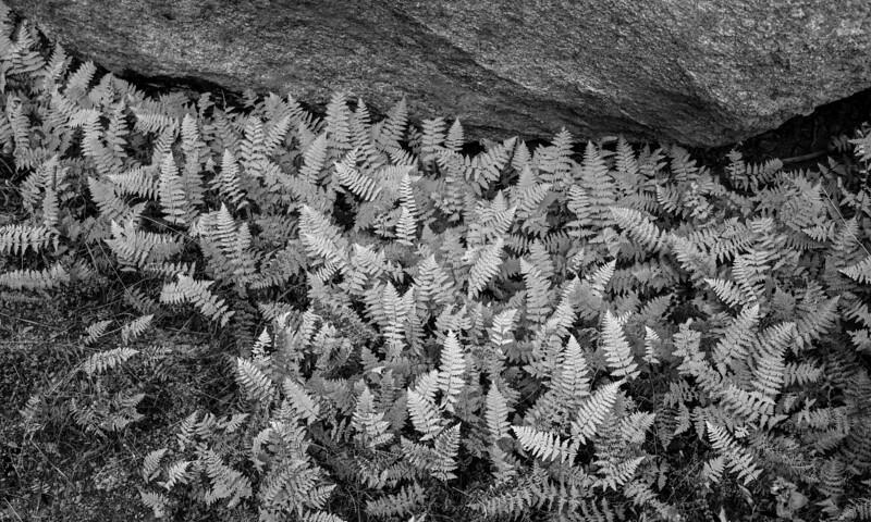 Ferns & Rhyolite
