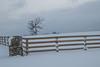 Hawk in tree in pasture in winter next to Highway 63 in Missouri.