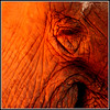 Someone asked me if this was an Elephant's behind. Actually its an eye and part of its mouth!
