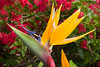 Bird of Paradise, Venice Beach, California