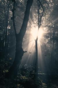 Mystical Autumn Forest
