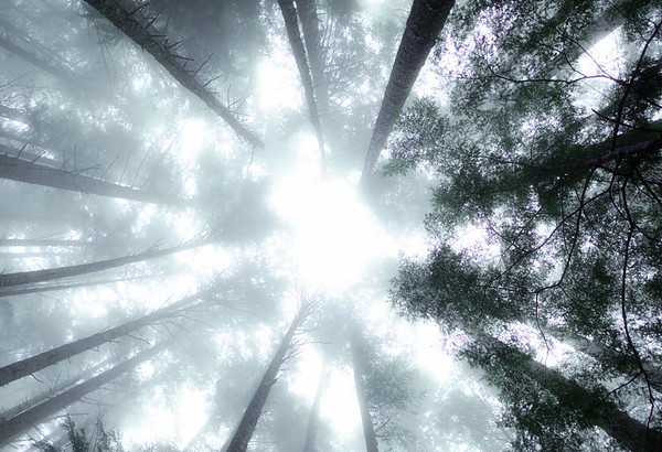 Ethereal Forest
