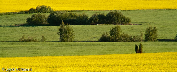 Green & Yellow - Hausjärvi, Finland