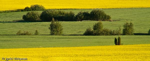 Green & Yellow - Hausjärvi, Finland