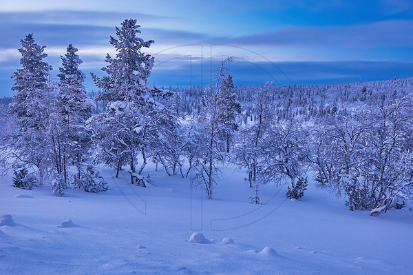 Lapland Blue