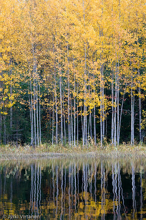 Fall Colors - Kannonkoski, Finland