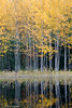 Fall Colors - Kannonkoski, Finland