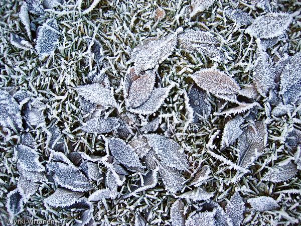 Autumn Frost - Kuopio, Finland