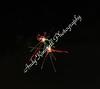 dland fireworks-2