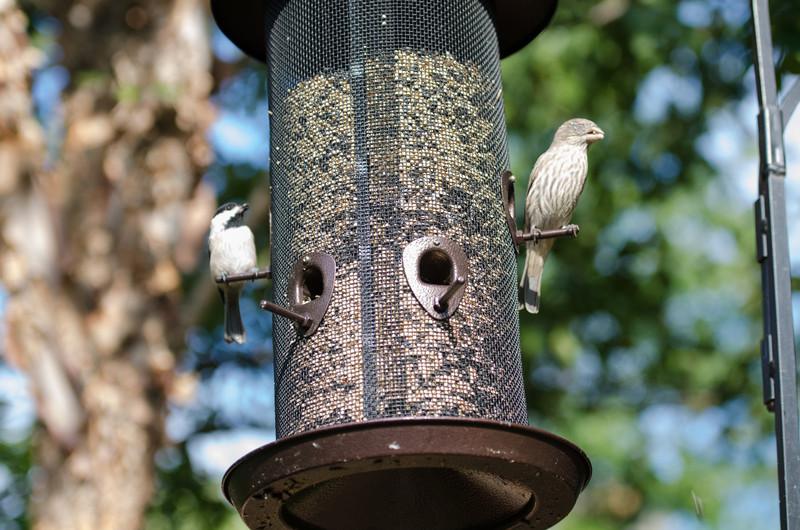 One-eyed birdie