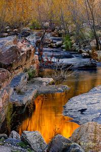 """""""Liquid Gold"""", Sabino Canyon, Tucson, Arizona."""