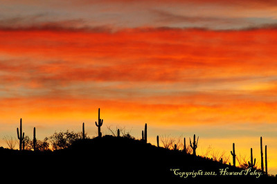 """Morning Rush"", Molino Canyon, Tucson, Arizona."