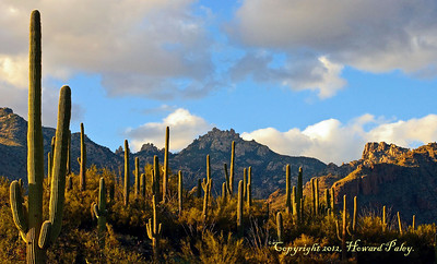 """Primetime"", Sunset, Sabino Canyon, Tucson, Arizona."