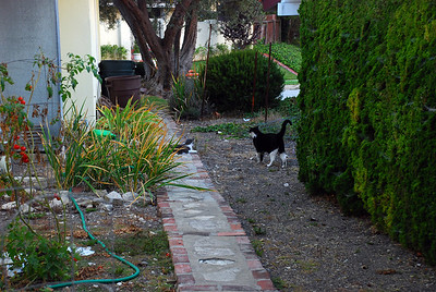 DSC_0048Side yard with cats1