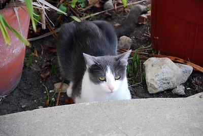 DSC_0039Minnie kitty