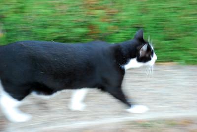 DSC_0059cat in motion