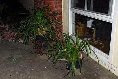 DSC_0072flash of orchids