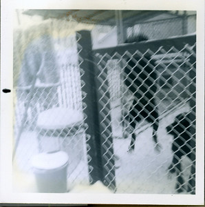Our black labs Governor and Jim in their kennel.