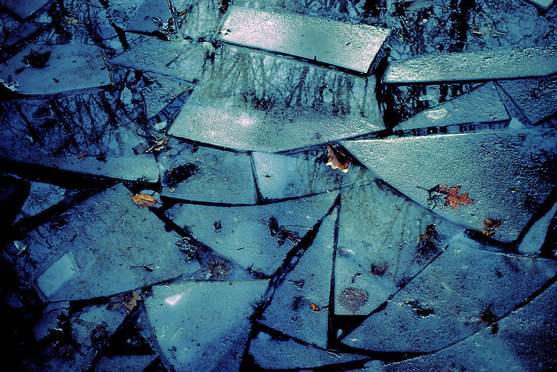 Icy abstract with tree reflections and leaves embedded in ice