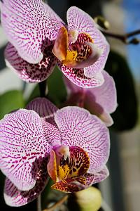 Susan's orchids