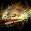 Fly Away Milkweed Seeds