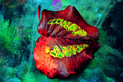 Colorful Bradford pear leave portrait