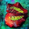 Colorful Bradford pear leave portrait