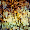 Photo of water and tree reflections in a pond in a local park in the Winter done in various edits.