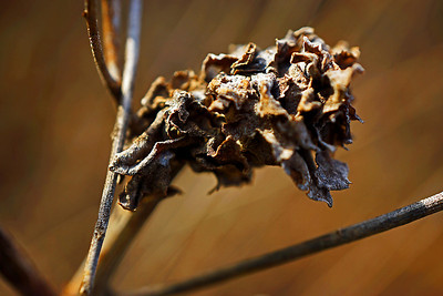 Dried plant at the park in the Winter