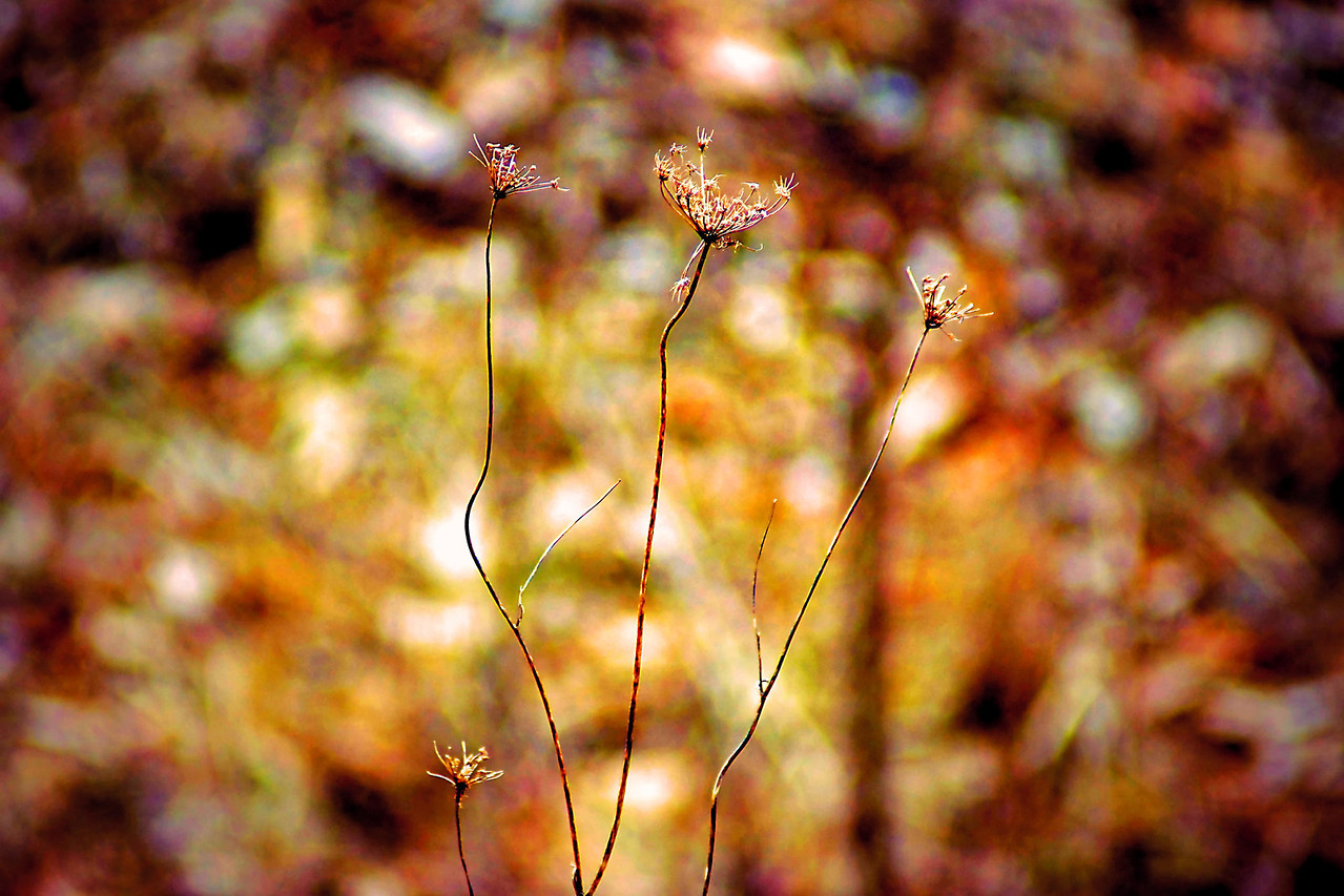 A Walk With Pointillism