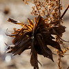 Dried Winter bouquet from the park