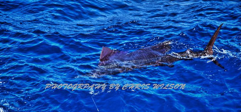 CR Sailfish HDR 004